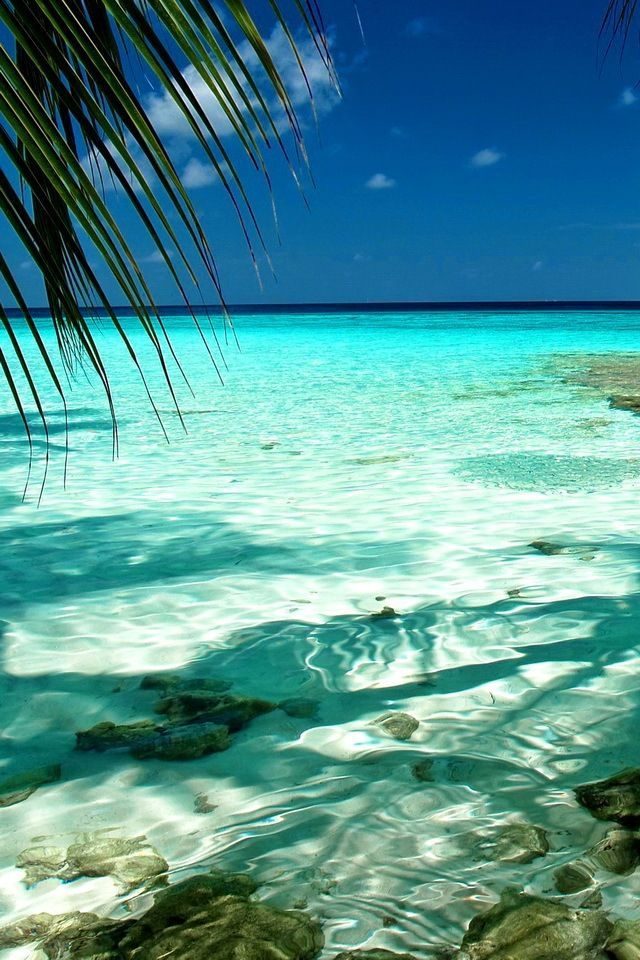 Crystal clear water surrounded by a white beach, palm trees and blue skies.