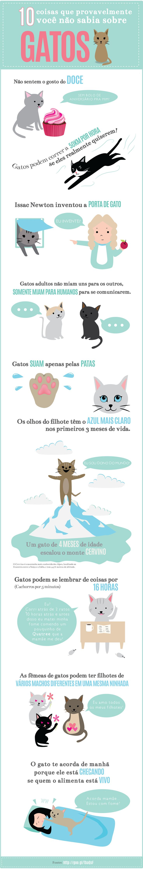 10 coisas que provavelmente você não sabia sobre Gatos