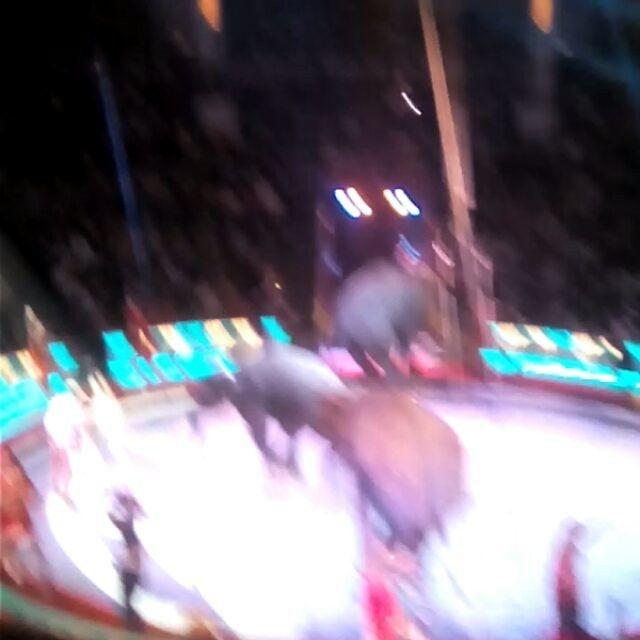 WEBSTA @ svetlanakopteva - #московскийцирк  #циркникулина #московскийциркникулина  #нацветномбульваре  #цирк #москва #цветнойбульвар  #клоуны  #артистыцирка  #никулин