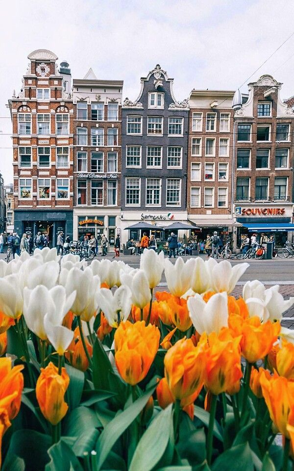 Amsterdam With Tulips...a great gift for her...but trip to Amsterdam and Tulips. The House of Q