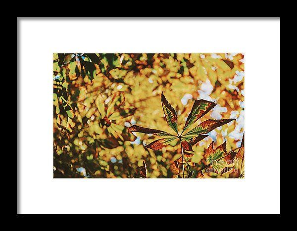 Green And Yellow Autumn Leaves Framed Print