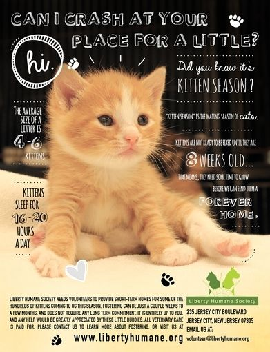 25 best ideas about pet adoption on pinterest adoptions from the heart kids for adoption and. Black Bedroom Furniture Sets. Home Design Ideas