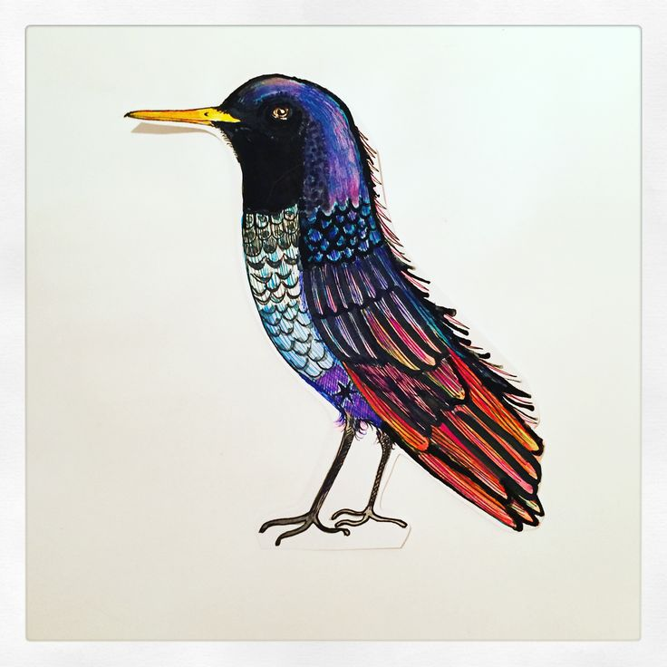 Sidney Starling illustration by Lizzie Reakes
