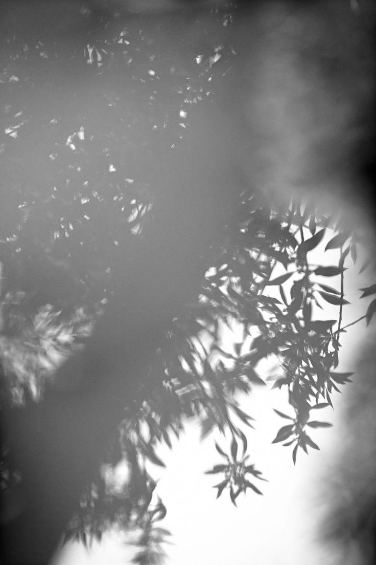 A spring breeze, MyDubio.