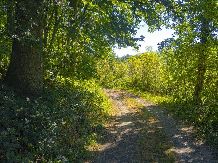 https://flic.kr/p/MW2iFv | A Walk in Sunny Autumn | Gors Opleeuw Nature.  [Explored, Oct 6, 2016].