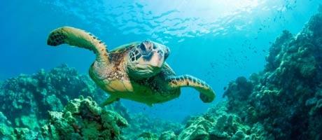 Thaimaan merikilpikonnat vaarassa.