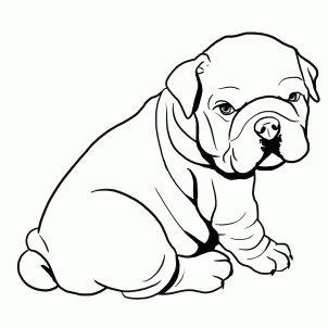 how to draw a bulldog, english bulldog step 4