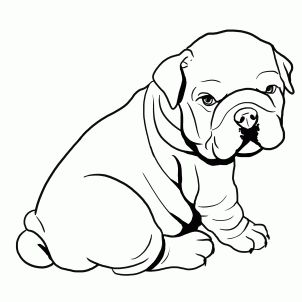 how to draw a bulldog, english bulldog step 4