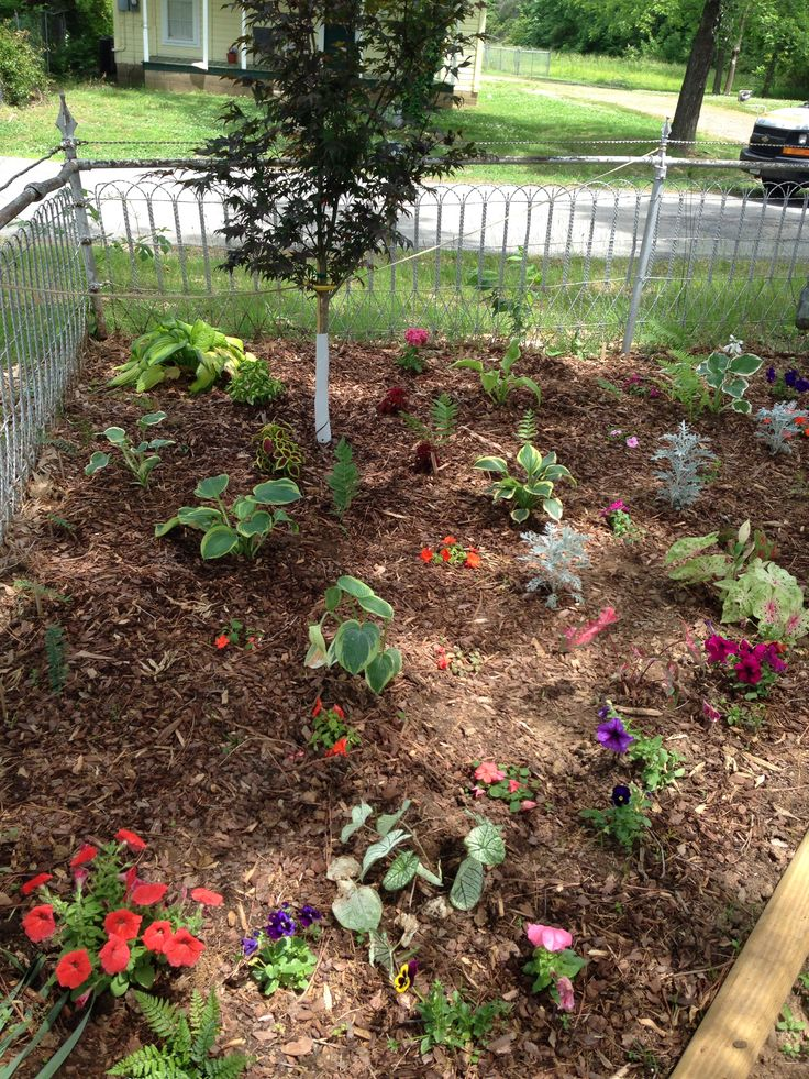 The flower bed is looking better.  Last week May 2014.