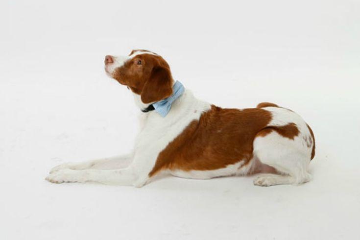 Pajaritas coloridas para perros