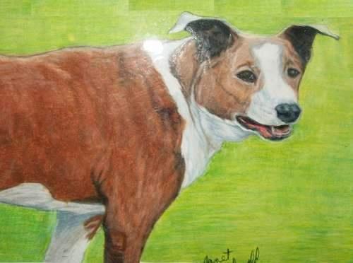 Janet Macdonald's pencil art work