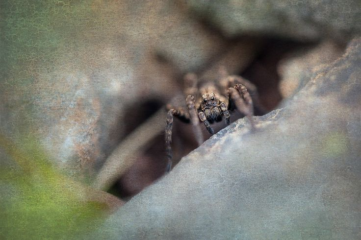Wolf Spider (family Lycosidae). Post-processed using Lightroom, Photoshop, onOne Perfect Effects 8 and Flypaper Textures. Available as canvas/print on 500px Art.
