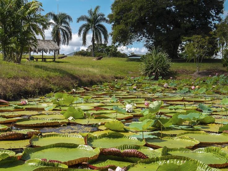 Nieuw-Amsterdam, Suriname.