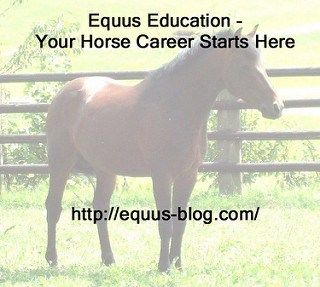 Free Equine Courses at CAFRE: Health, Nutrition and Behaviour