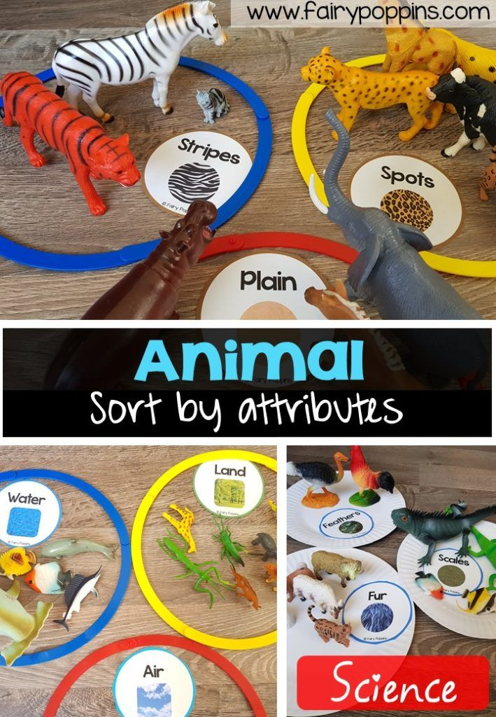 Animal Sort and Classify Animal activities for kids, Zoo