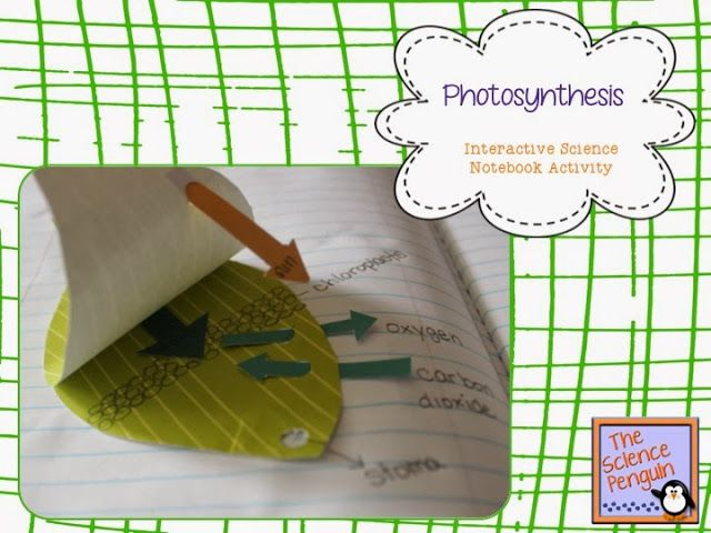 The Science Penguin: Photosynthesis Notebook Freebie