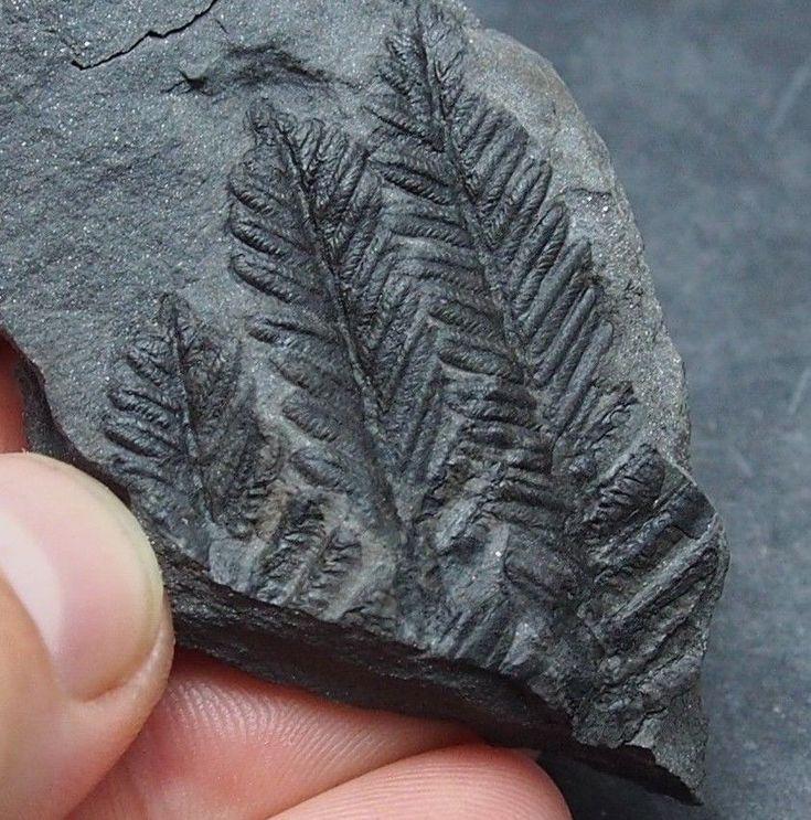 Vysvětlete, jak se radiokarbonové datování fosilií a artefaktů liší od termoluminiscence