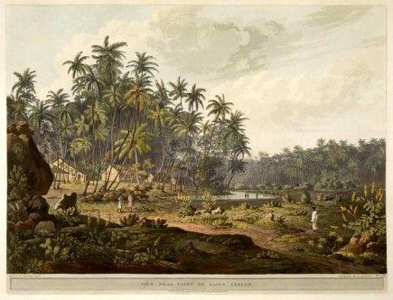 View near Point de Galle, Ceylon