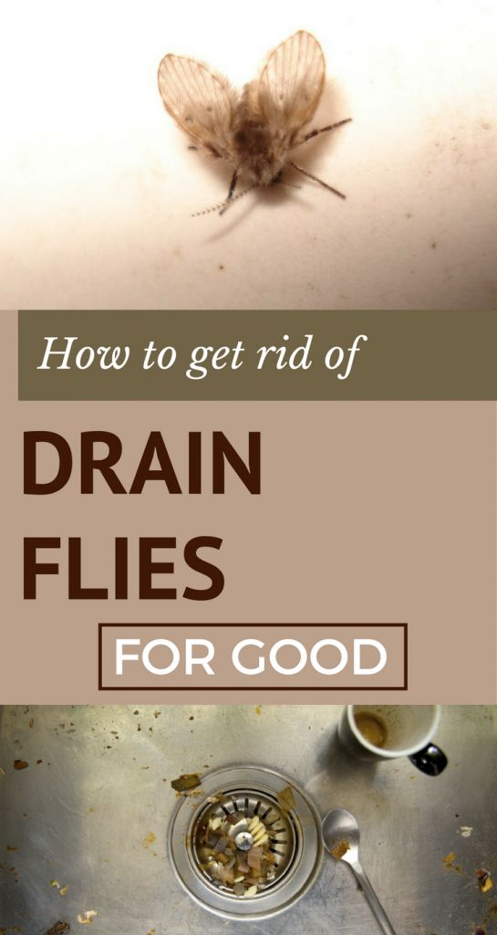 How to Get Rid of Drain Flies For Good - nCleaningTips.com ...