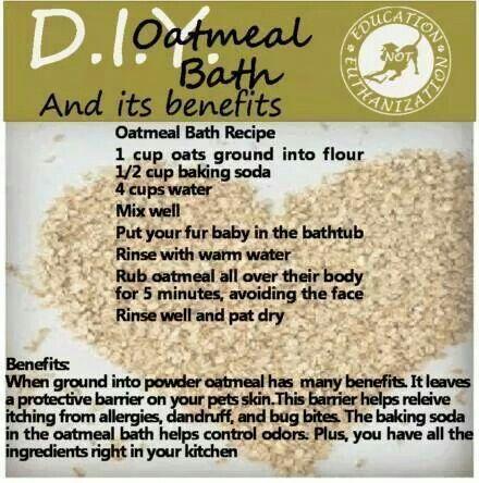 Oatmeal bath for dogs healthy skin