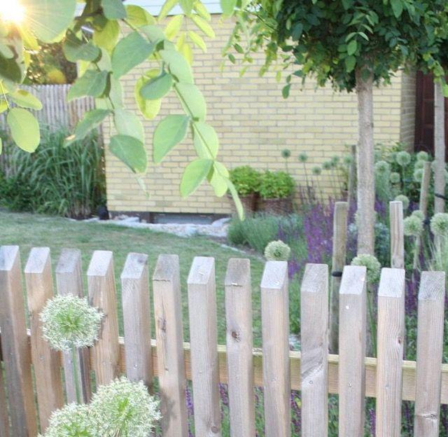 Staket trä trädgård