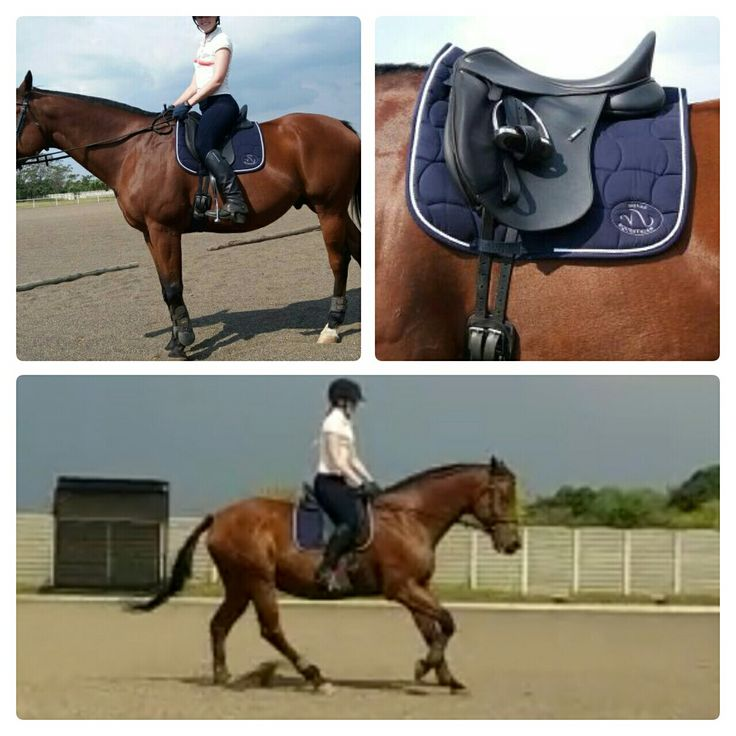 Novas Equestrian dressage numnah