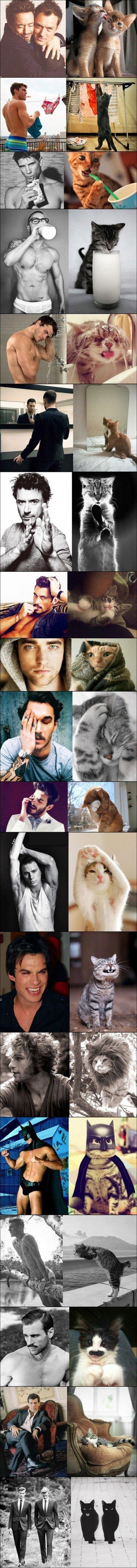 Ein Post für die Damenwelt: Kerle und Katzen - Fun Bild