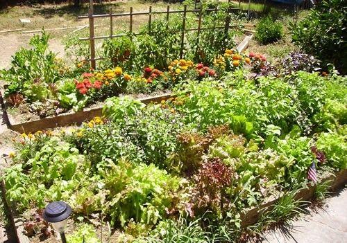 Organic Raised Bed Veggie Gardens {Part I} « For The Home «