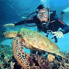 scuba diving with sea turtles!!