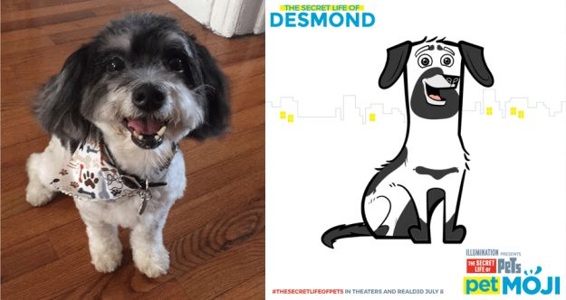 Desmond, the old man: | We Made Emojis For Our Pets And They Are Adorable