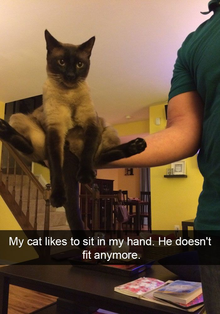 Best Funny Cats Images On Pinterest Funny Things And Smile - 26 hilarious cat snapchats that need to be treasured forever