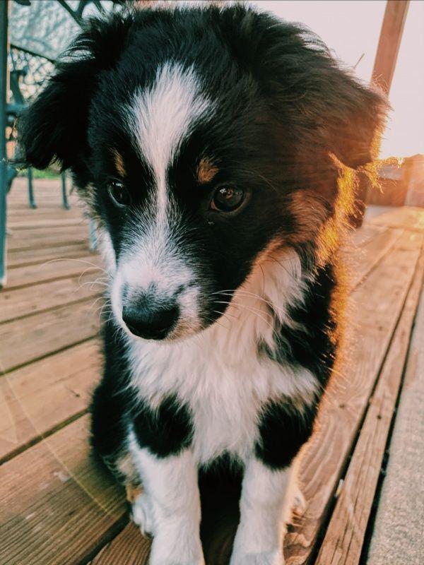Vsco Madelineethompson Cutest Dog Ever Dogs Most Cutest Dog