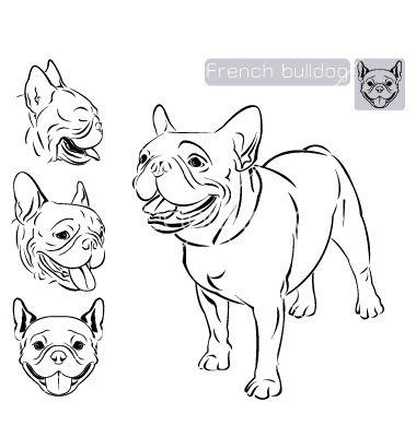 Line art French Bulldog on VectorStock