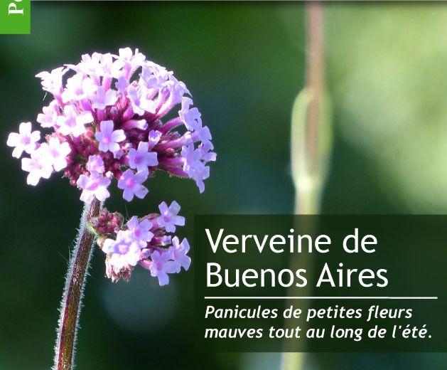 Magazine Petit Jardin N°115 - Juillet 2016 - Jardinage, plantes et fleurs