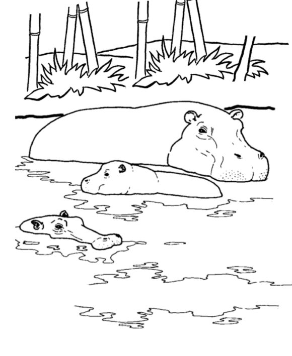hippo in the water african animal coloring pages