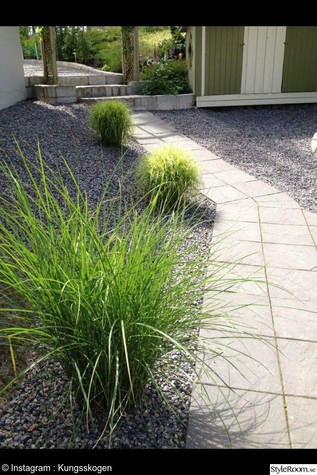 prydnadsgräs,grus,trädgård