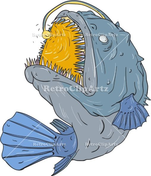 Anglerfish Swooping up Lure Drawing Vector Stock Illustration.  Drawing sketch style illustration of an Anglerfish of teleost order Lophiiformes that are bony fish named for their characteristic mode of predation, which a fleshy growth from fish's head (the esca or illicium) acts as a lure, swooping up viewed from the side set on isolated white background. #illustration #AnglerfishSwooping