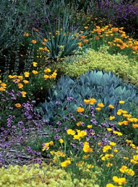 Why Garden with Native Plants & How to Find Native Plants  From California Native Plants Society