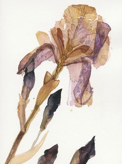 Victoria Crowe - pressed flowers