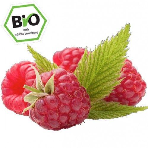 BIO Himbeere Aroma Queen herbsttragend