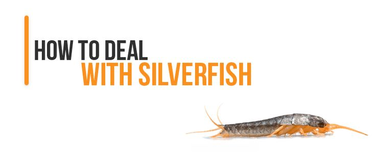 9 best silverfish images on pinterest pest control get for How to get rid of silver fish