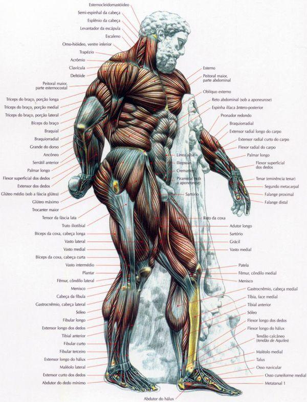 Mapa dos Músculos                                                                                                                                                                                 Mais