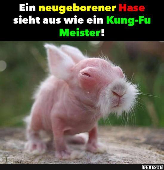 Ein neugeborener Hase.. | Lustige Bilder, Sprüche, Witze, echt lustig