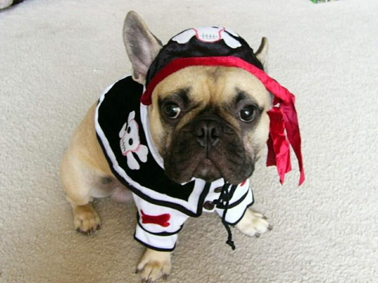 Photos - The San Diego County French Bulldog Meet-up Group. (San Diego, CA) - Meetup