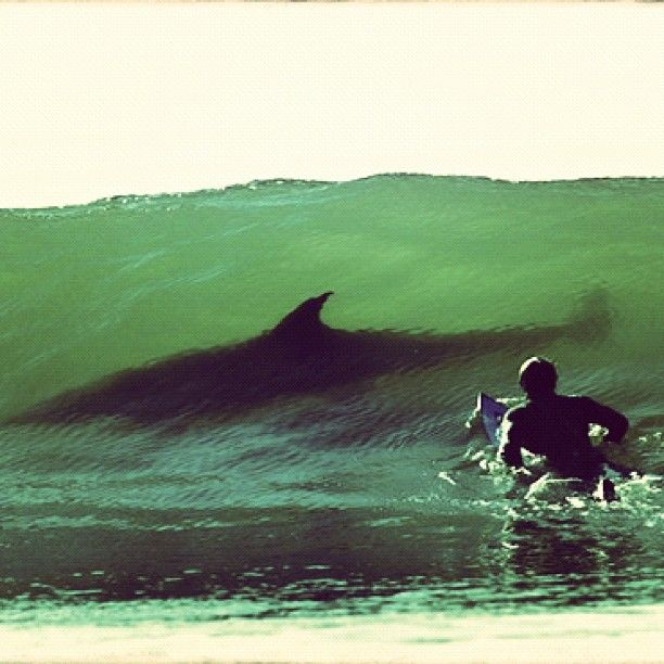 shark in a wave...awesome picture