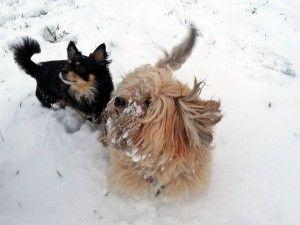 Beste #Freunde (fast) alle Fotos und Texte  #Hundefreundschaft, #Hundefotos, #Hundecomic, #Fotocomic