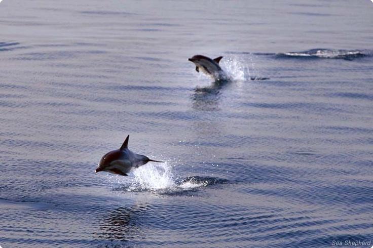 Photos - Sea Shepherd