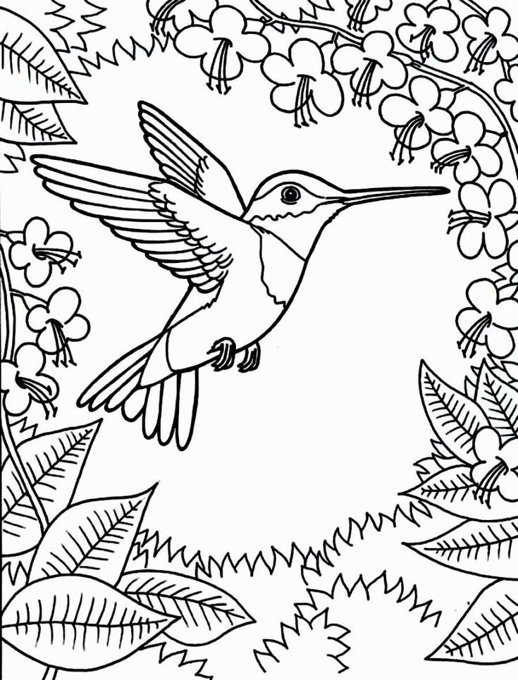 Best 25 Bird Coloring Pages Ideas On Pinterest