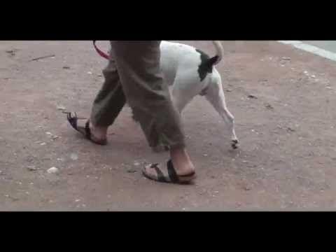 OKODOG Annemasse Sallanches Divonne comportementaliste chien dressage canin.  #annemasse #chien #comportementaliste