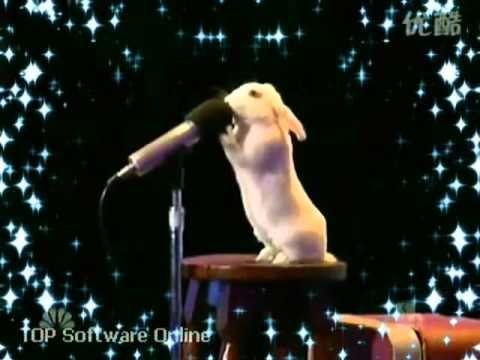 "Funny Rabbit Sings ""Down the Rabbit Hole"" by Adam Lambert"
